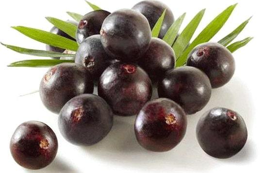 Φρούτο Acai Berry